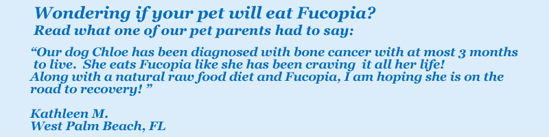 Fucopia testimonial: Our dog Chloe has been diagnosed with bone cancer with at most 3 months to live.  She eats Fucopia like she has been craving it all her life!